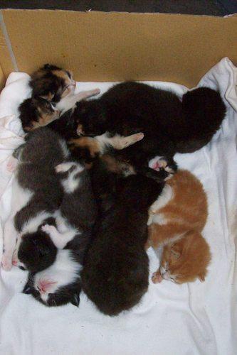 2 week old kittens