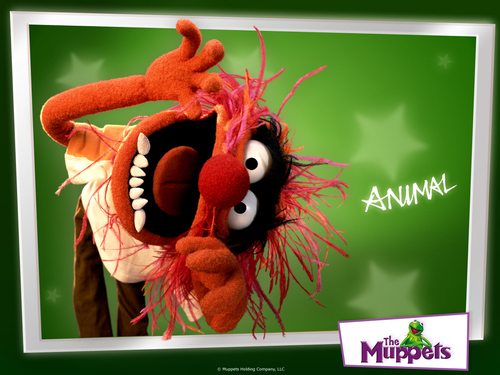 The Muppets wallpaper titled Animal