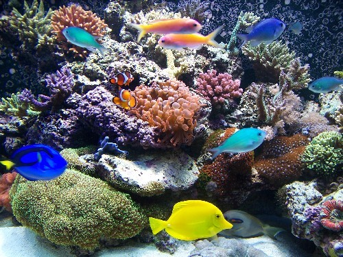 Aquarium. . Wallpaper and background images in the Aquariums club ...