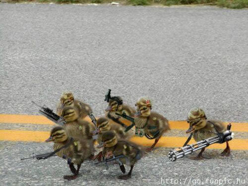 Animal Humor wallpaper entitled Army Ducks