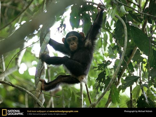 Baby Hangs From درخت Limb