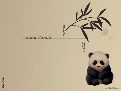 Pandas wallpaper titled Baby Panda wallpaper