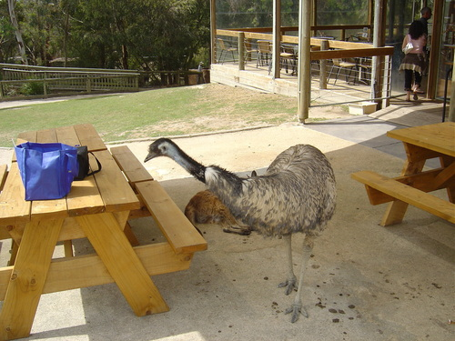 images ballarat wildlife - photo #46
