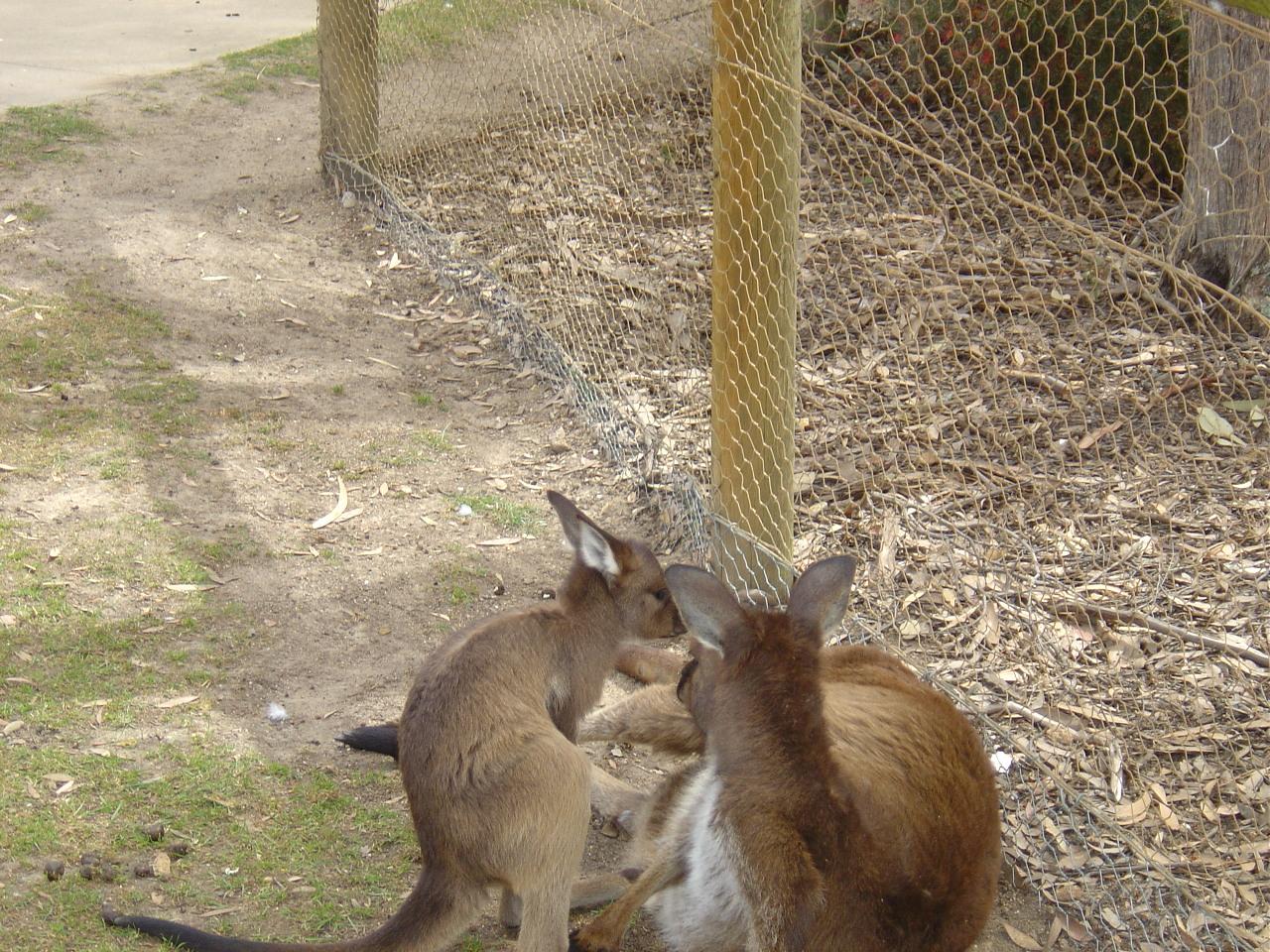 images ballarat wildlife - photo #8
