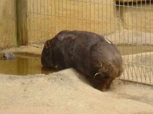 Australia 바탕화면 titled Ballarat Wildlife Park