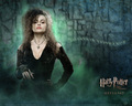 the-black-family - Bellatrix wallpapers wallpaper