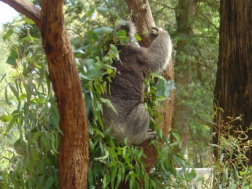 Bimbimbie Wildlife Park