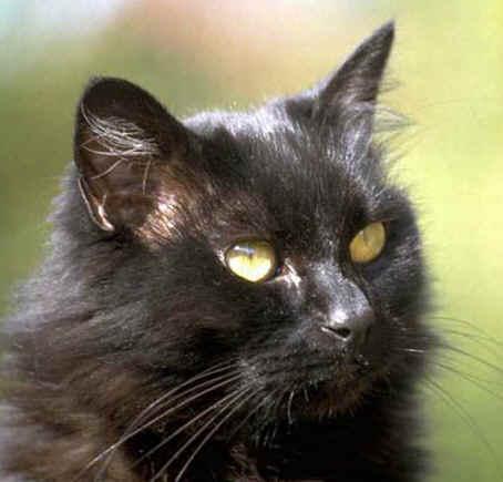 Black 猫