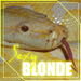 Blondes - blonde-hair icon