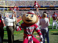 Brutus - ohio-state-football photo