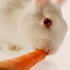 Bunny Icons - bunny-rabbits icon