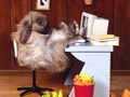 Bunny Wallpapers - bunny-rabbits wallpaper