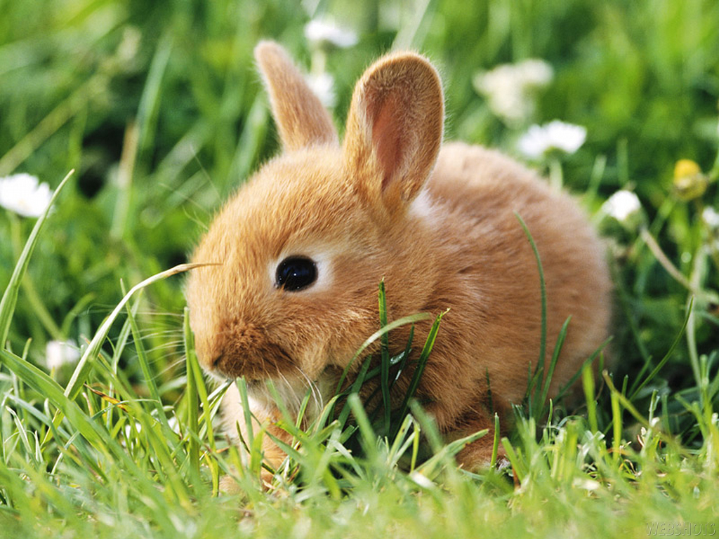 bunny wallpapers bunny rabbits wallpaper 128639 fanpop