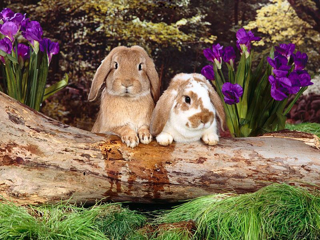 bunny rabbits images bunny wallpapers hd wallpaper and