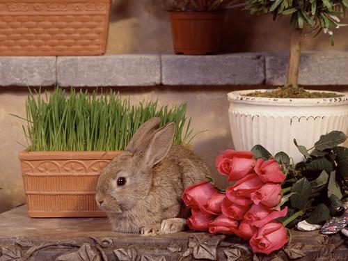 Bunny 壁纸