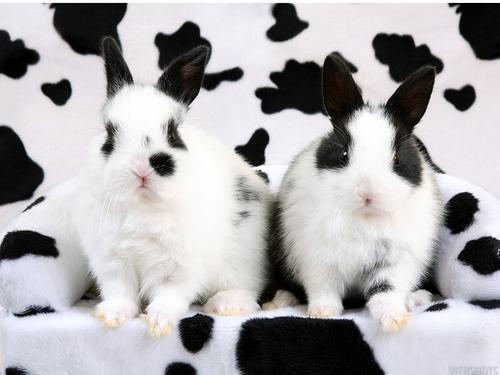 Bunny fondo de pantalla