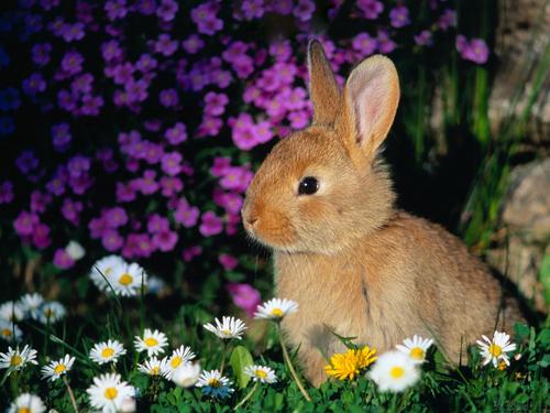 Bunny fonds d'écran