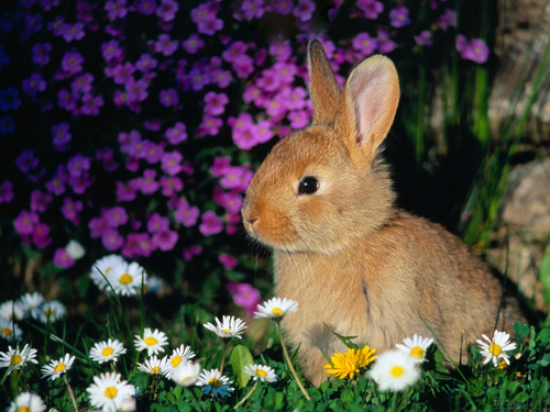 Bunny mga wolpeyper