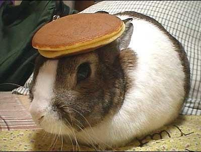 Bunny with pancake