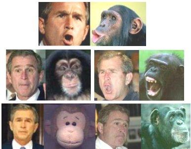 Bush VS Monkey
