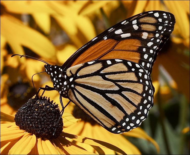 Butterflies-butterflies-603689_750_612.jpg