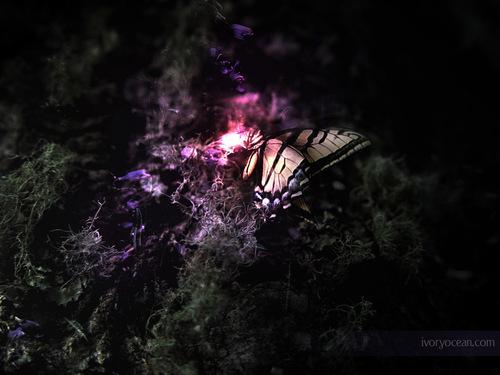 나비 바탕화면