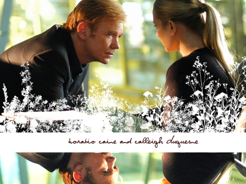 CSI: Miami wallpaper entitled Horatio & Calleigh