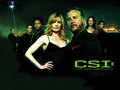 CSI - gil-grissom wallpaper