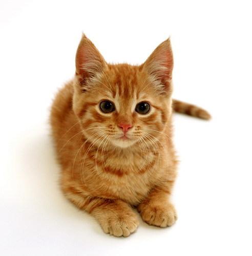 Cats wallpaper titled CUTE CAT