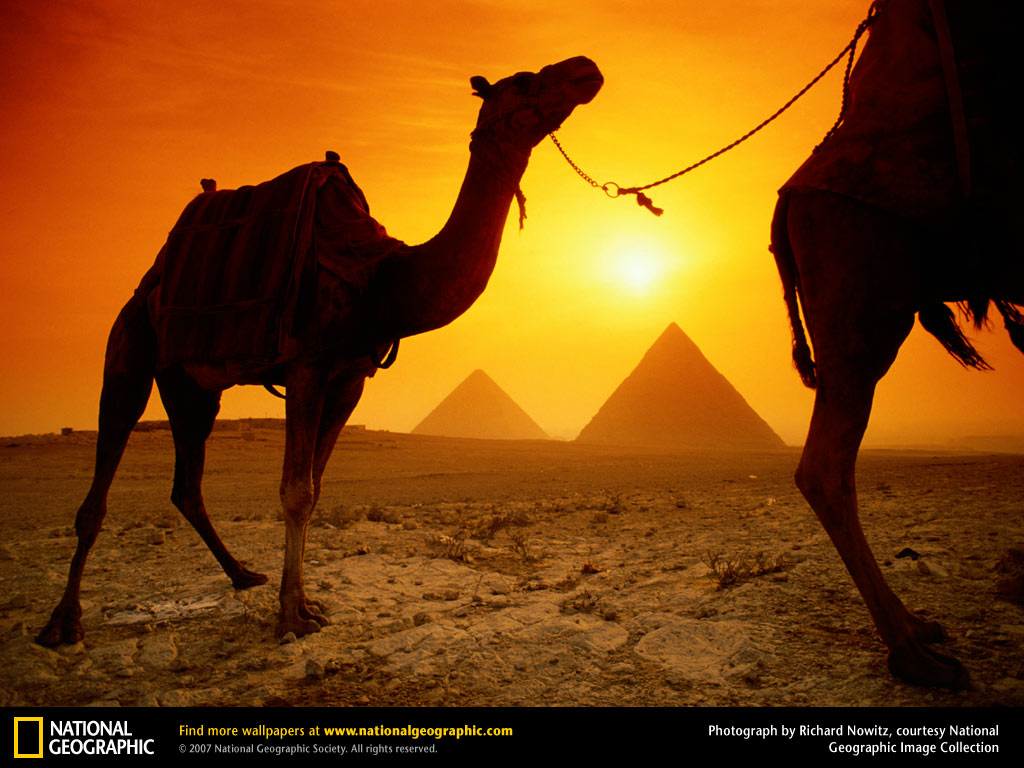 Camels and Pyramids Wallpaper - Egypt Wallpaper (773002) - Fanpop ...