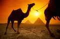 Camels and Pyramids