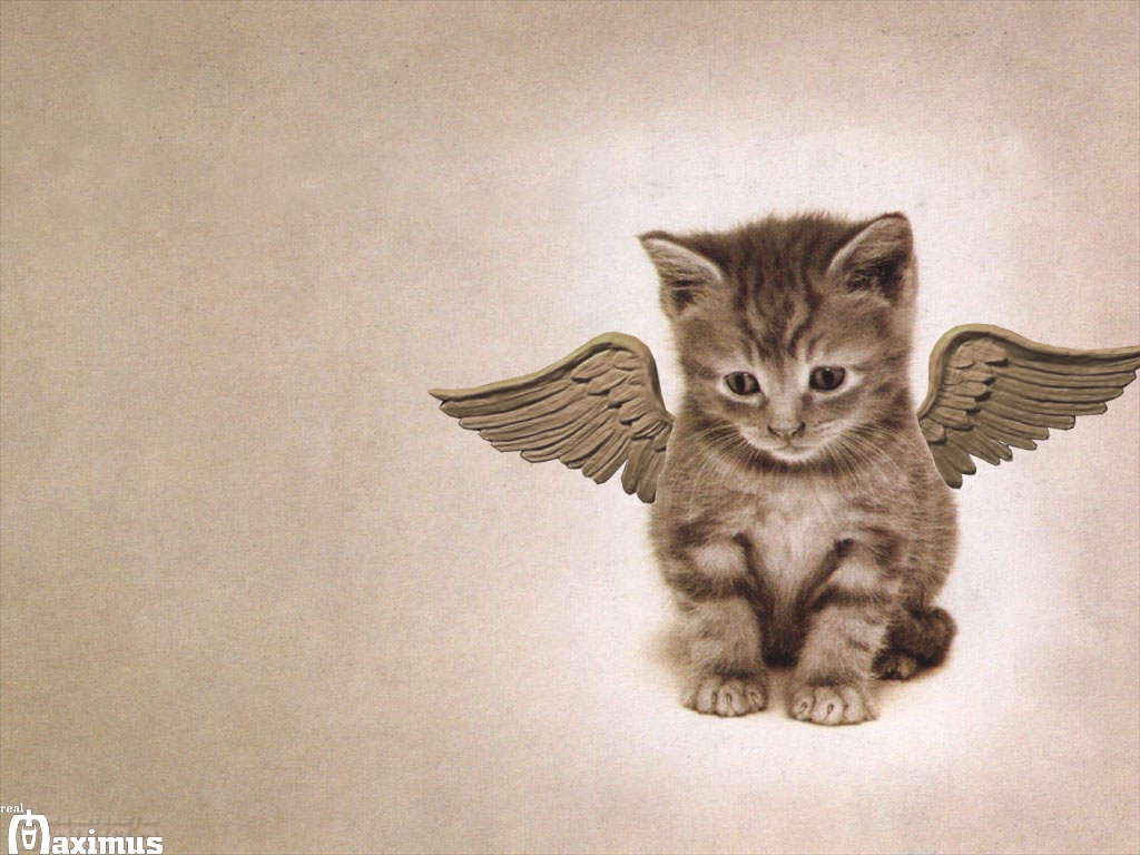 wings Cats Wallpapers Kittens Backgrounds Animals Photos