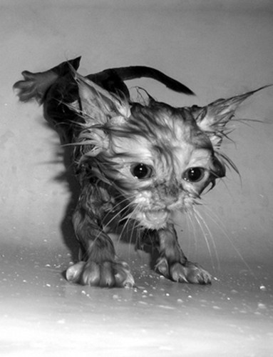 Cat baths - cats Photo