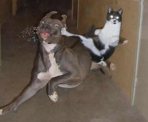 Animal Humor wallpaper entitled Cat vs Dog