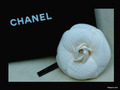 chanel - Chanel wallpaper