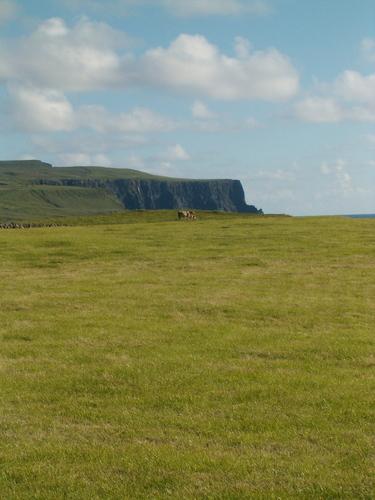Cliffs of Moher plus Cow :D