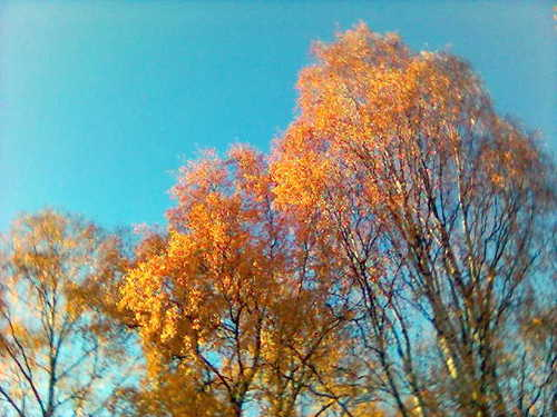 Contrasting colors - autumn Photo