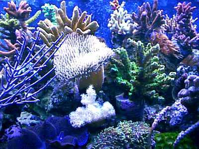 Sea Life wolpeyper entitled Coral Reefs