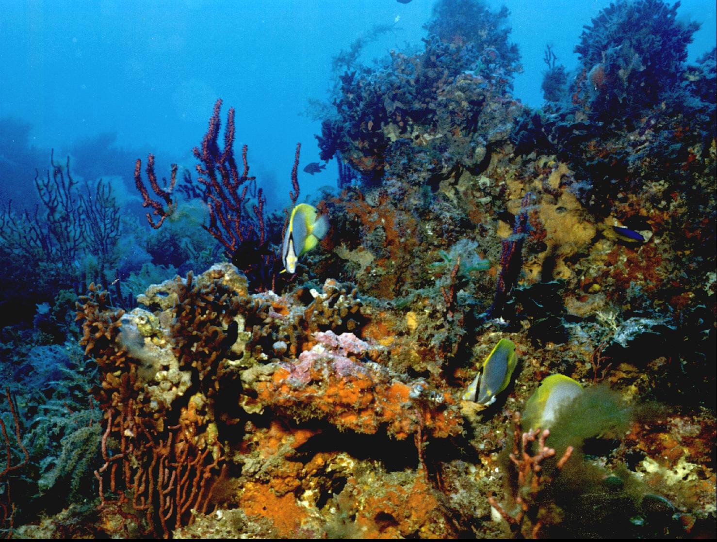 Coral Reefs - Sea Life Photo (114580) - Fanpop
