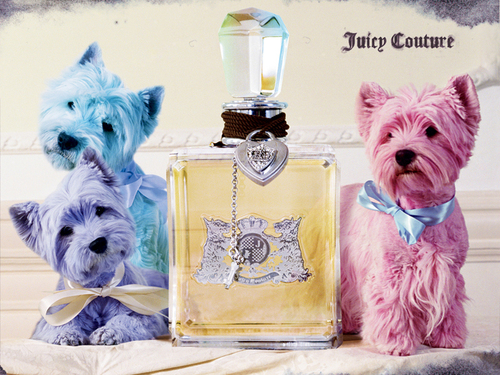 Cute juicy wallpaper - juicy-couture Wallpaper