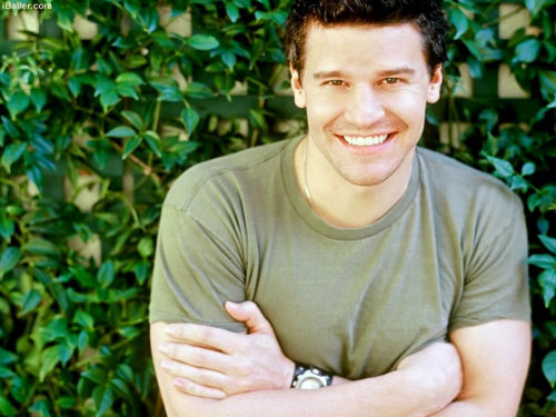 David Boreanaz wallpaper entitled David