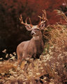 Deer - deer photo