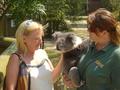 Doc pets a Koala