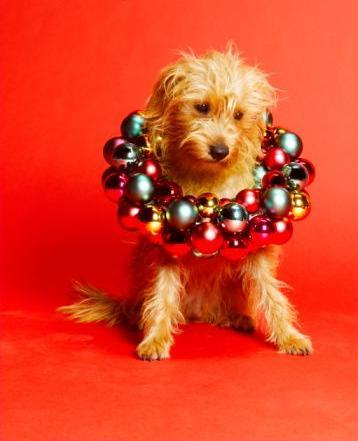 Dog With Baubles