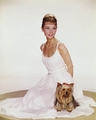 Doggie - audrey-hepburn photo