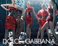 Dolce & Gabbana / wallpaper