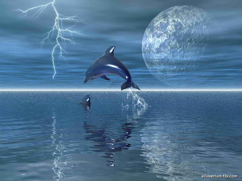 dolphins and whales images dolphin hd wallpaper and