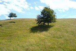 East Jutland landscape