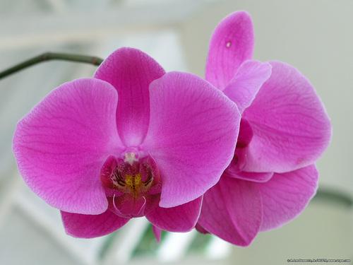El Yunque Flora