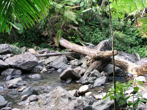 El Yunque Stream